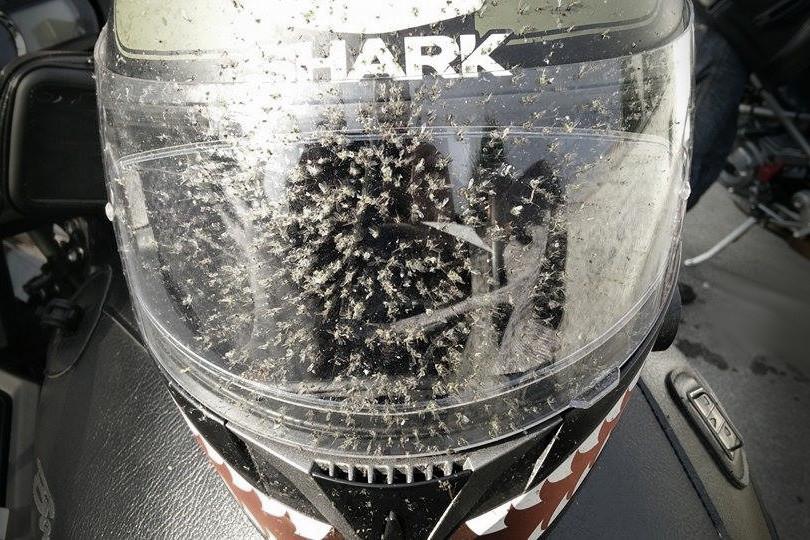 mosquitos casco moto